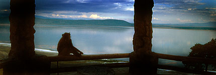 A baboon looks onto lake Nakuru from the Baboon Cliff lookout. Javier Yanes/Kenyalogy.com