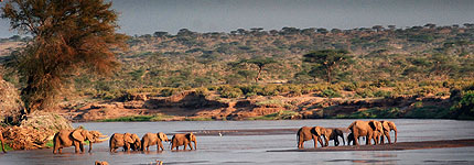 Elephants crossing the Ewaso Nyiro river. Javier Yanes/Kenyalogy.com